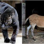 Animales que se modificaron por la ciencia