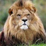 Descubre todo lo que necesitas saber sobre los animales vertebrados