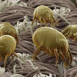Datos curiosos sobre los ácaros