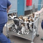 La crueldad científica: una dura realidad